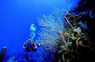 costa calida plongée sous marine