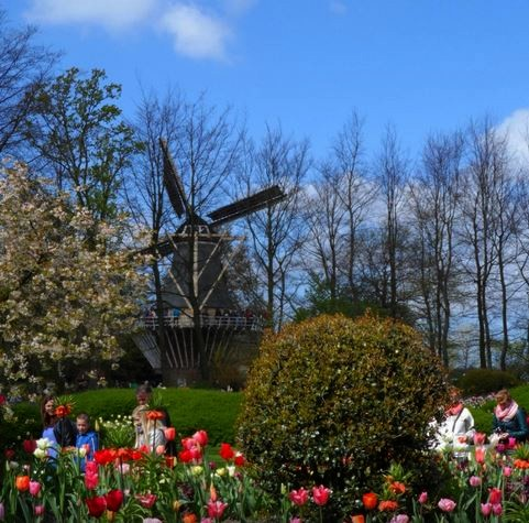moulin-Keukenhof