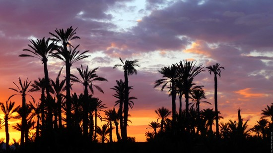 palmeraie-marrakech