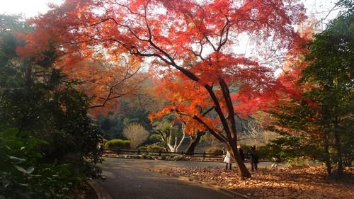 parc-Shinjuku-Gyoen