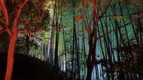 lumiere-Kodai-ji-kyoto