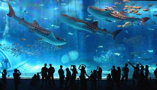 visiter-aquarium-Kaiyukan-osaka