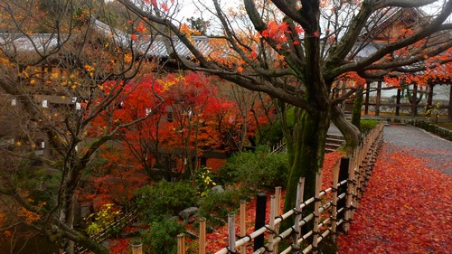 visiter-temple-Tofuku-ji