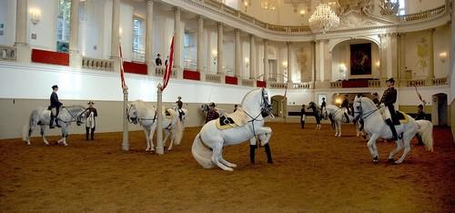 Spanische-Hofreitschule-equitation-vienne