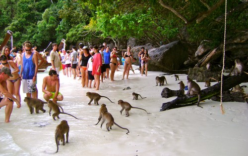 monkey-beach-koh-phiphi-plan