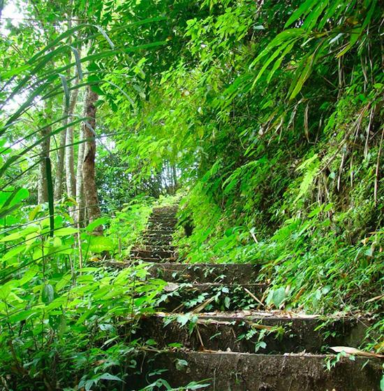 chemin-randonnee-munduk-Bali