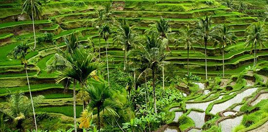 rizieres-tegalalang-Ubud-Bali