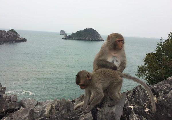 singe-monkey-beach-depuis-catba