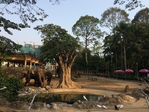 visiter-zoo-saigon