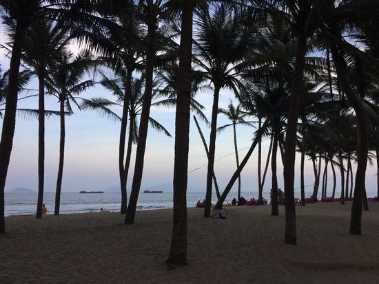 plage-hoi-an-palmier