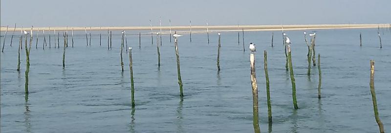 visite-guide-bateau-oiseaux-bordeauxwildlife