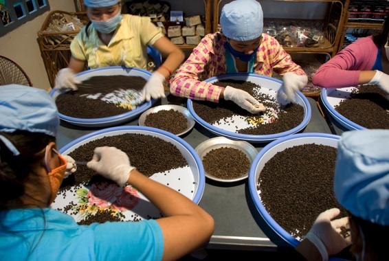 ferme-poivre-kampot-cambodge