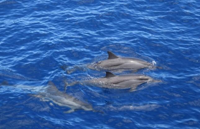 ou-voir-dauphins-reunion