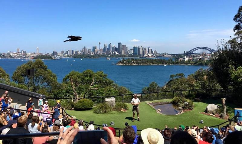 voir-zoo-Taronga-sydney