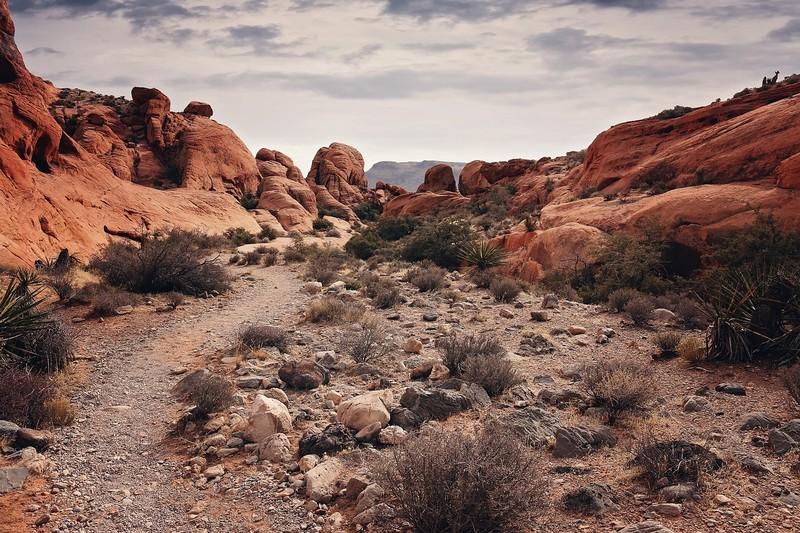 Visiter-red_rock_canyon-las-vegas