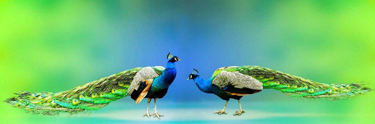 bird-park-KL