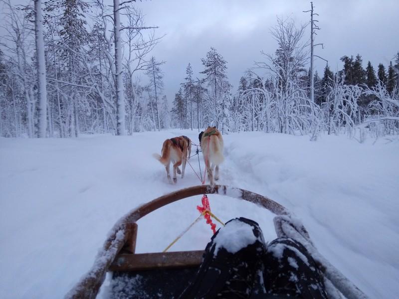 excursion-chien-traineau-depuis-rovaniemi