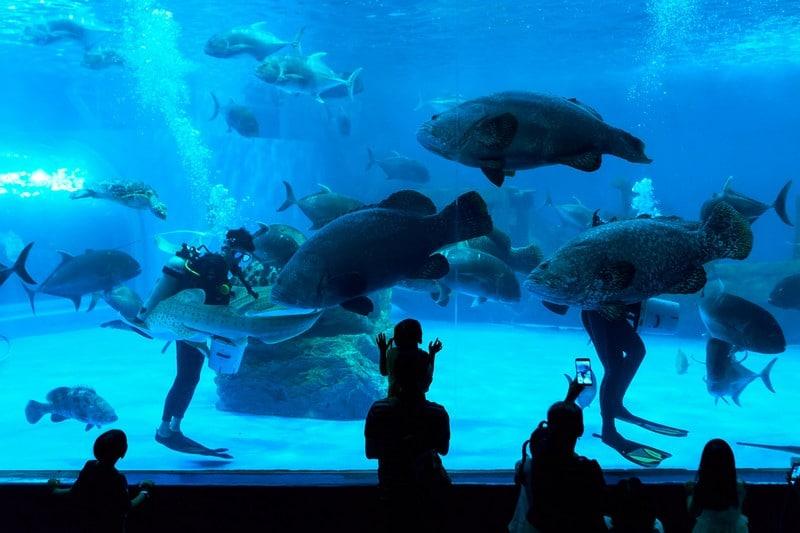 billet-parc-aquaventure-dubai