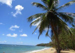 Que faire en Martinique - Visiter la Martinique