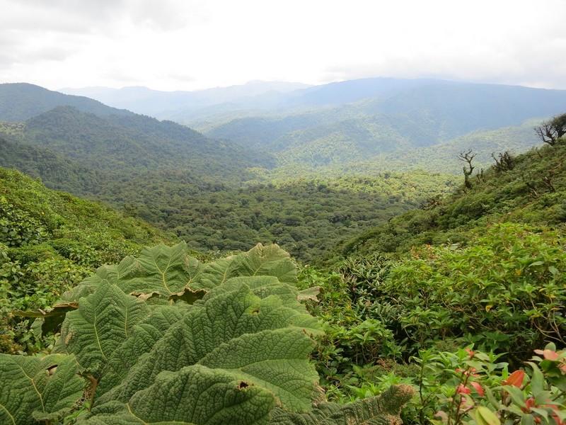 foret-Monteverde
