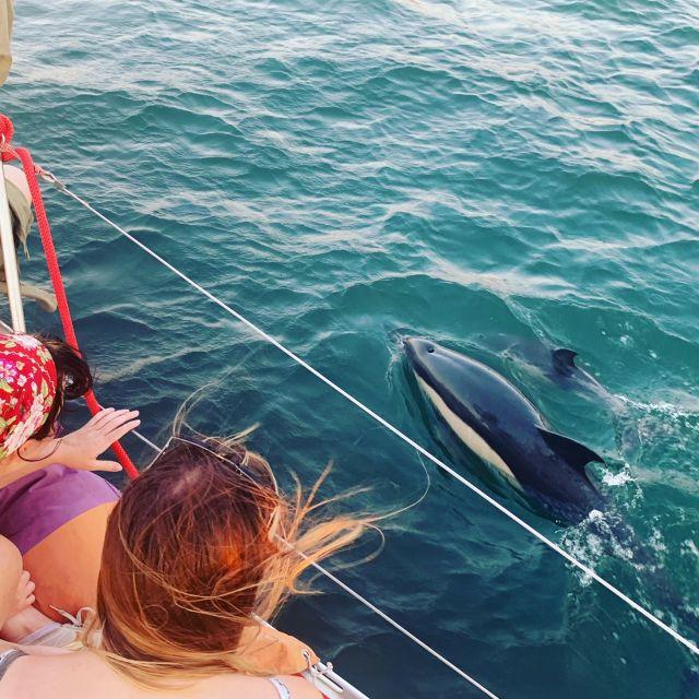 activite-bateau-lisbonne-dauphin