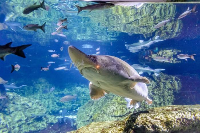 barcelone-aquarium-billet-coupe-file