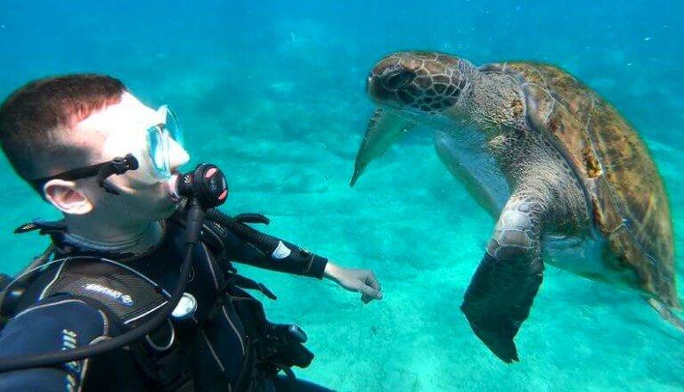 plongee-aquatique-tenerife-tortue
