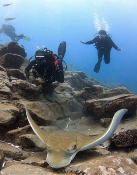 plongee-sous-marine-debutant-tenerife