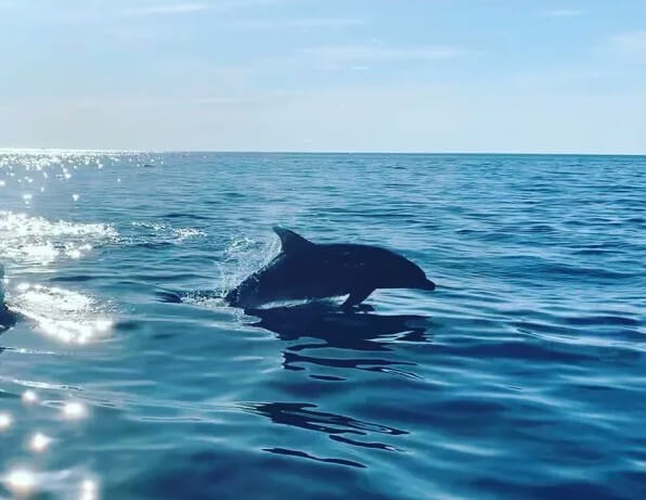 voir-dauphin-dans-la-reserve-de-scandola